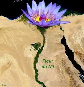 fleur-du-Nil-flower-lotus-bleu-SIL