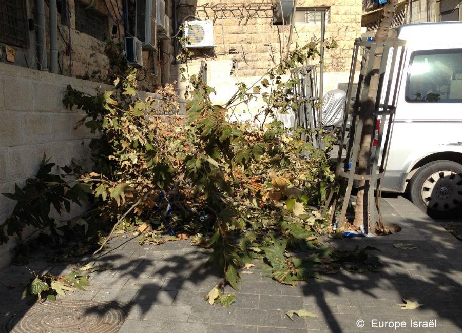 arbres cassés par la neige jerusalem