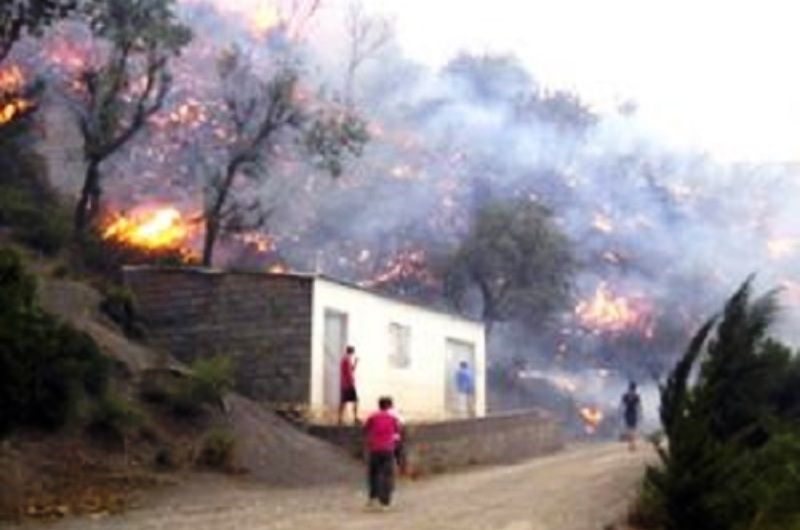 La Kabylie en feu ! Béjaïa s'embrase: Des incendies, d'origine douteuse, ont ravagé des vergers et menacé des habitations